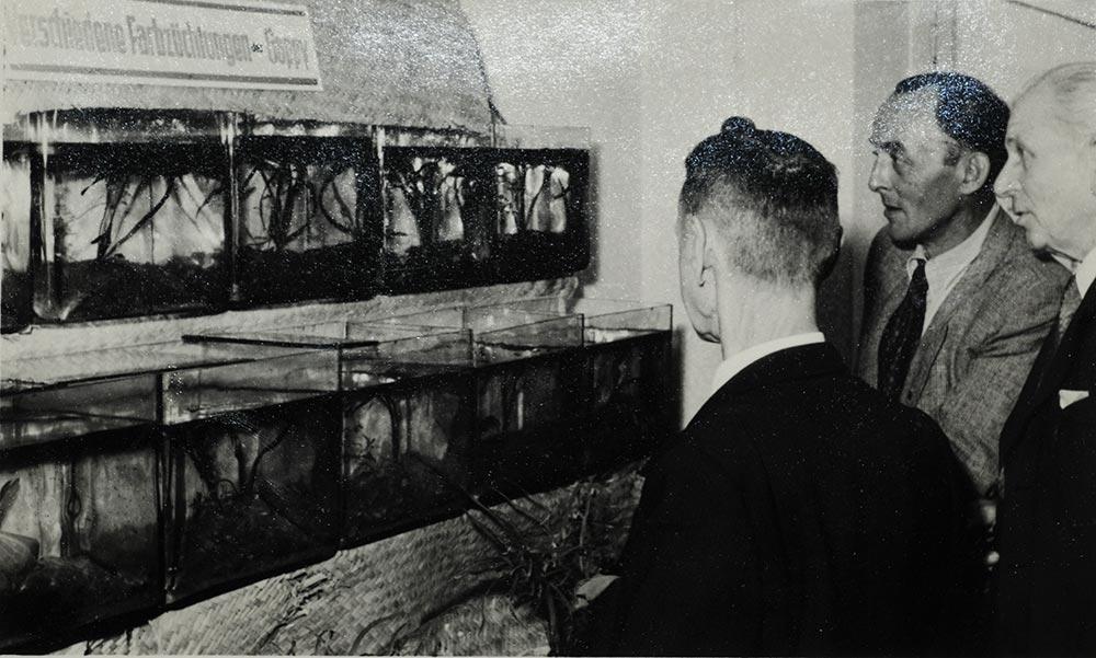 1. Dresdner Aquarien und Terrarienausstellung (1957), Aquarien