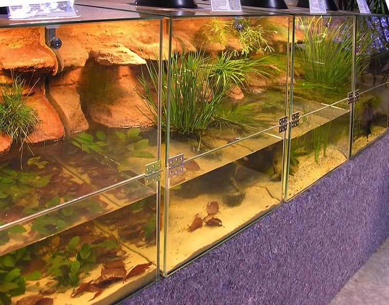 Amphibienbecken