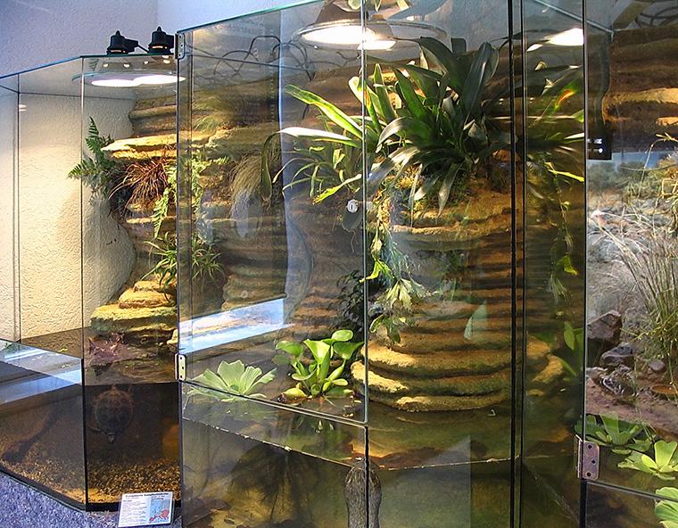 Becken für Wasserschildkröten