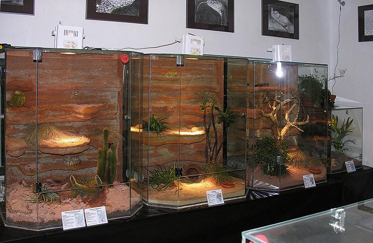 Becken für Giftschlangen