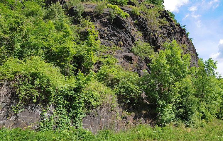 Felswand, Biotop für Mauereidechsen