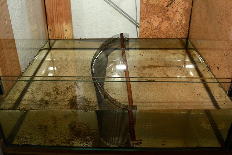Aufzuchtbecken für Molchlarven, Trennung mit Gazestreifen