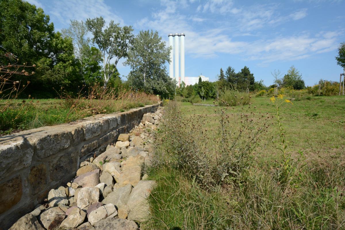 Stadtpark Pulvermühle, Biotop Mauereidechse