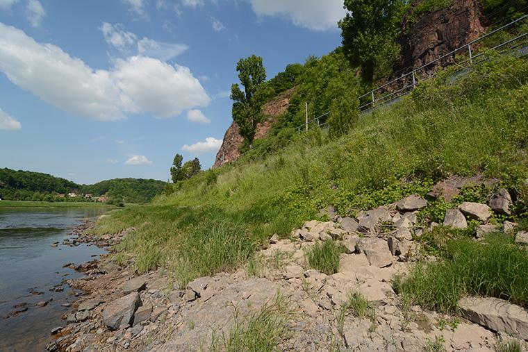 Biotop Würfelnatter Elbe