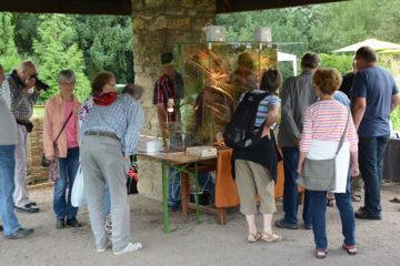 Besucher am Stand der DGHT Dresden beim beim Sommerfest im Botanischen Garten
