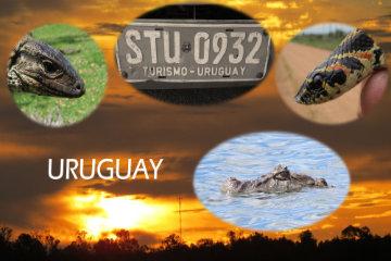 Fotomontage Uruguay