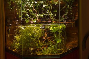 Vitrine als Aqua-Terrarium