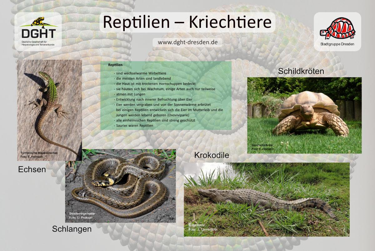Plakat DGHT Dresden Botanischer Garten 2018