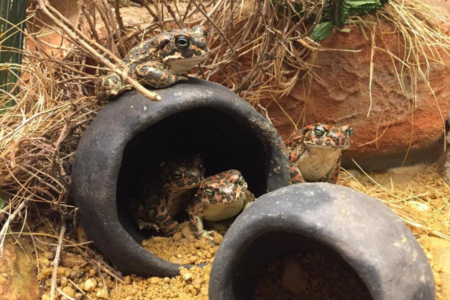 vier Kröten