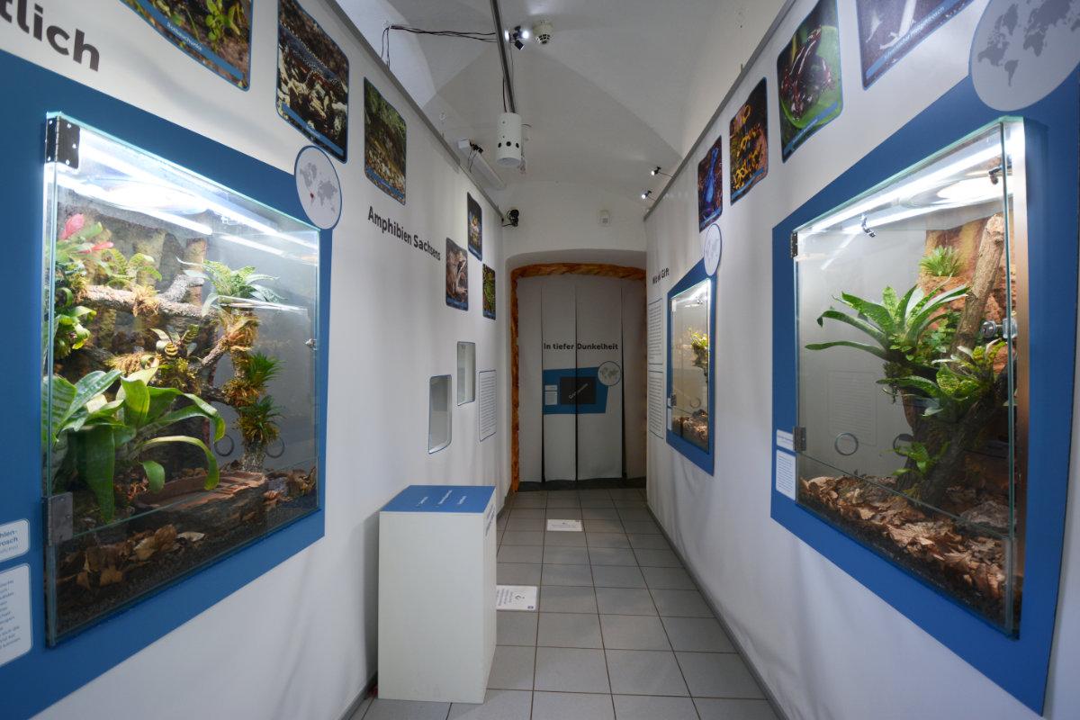 Becken für Dendrobaten und Baumkröten