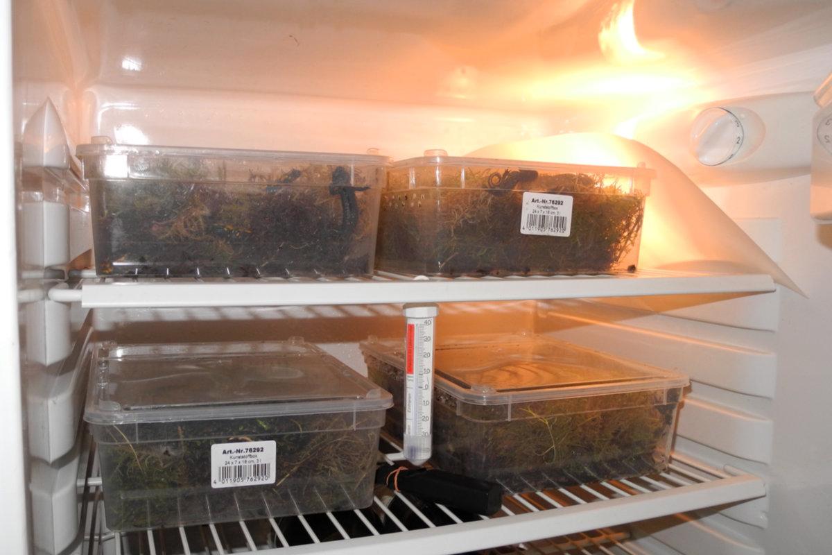 Kühlschrank Winterruhe Tiere