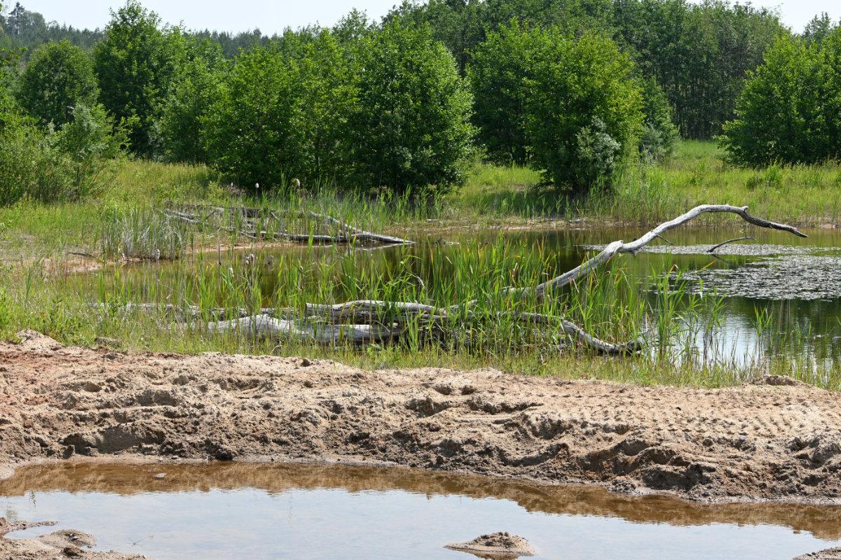 Biotop für Sumpfschildkröten, Kreuzkröten und andere Arten